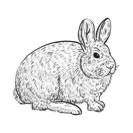 450x450 Snowy Arctic Hare. Vintage Vector Illustration In Sketch Style