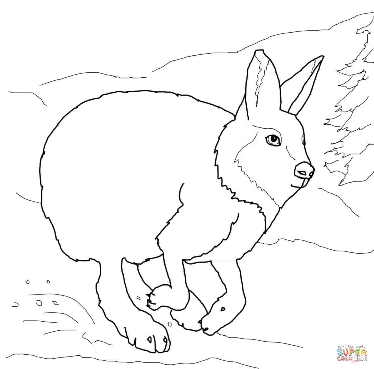 1200x1184 Arctic Hare Coloring Page Coloring Page For Kids
