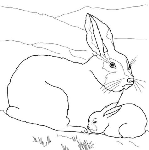 474x480 Arctic Hare Baby And Mother Coloring Page Free Printable