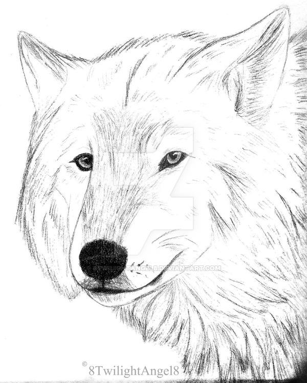 600x749 Arctic Wolf Portrait By 8twilightangel8