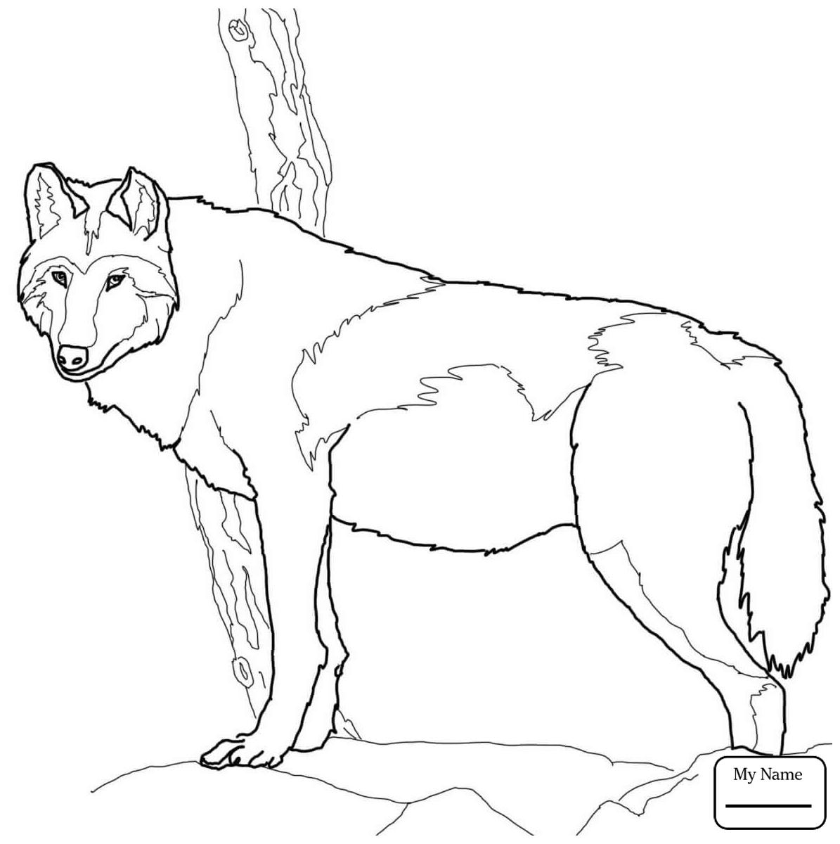 Arctic Wolf Drawing at GetDrawings.com | Free for personal use ...