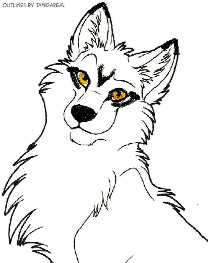 703x890 White Wolf With Black Markings By Rocketarcticwolf