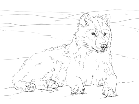 480x360 Arctic Wolf Coloring Page Free Printable Pages