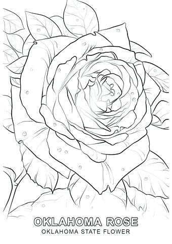 340x480 State Flower Coloring Pages Click To See Printable Version