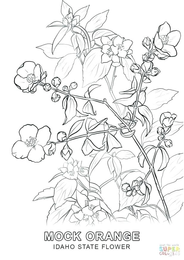 618x872 Arkansas Coloring Pages Click The State Flower Coloring Pages