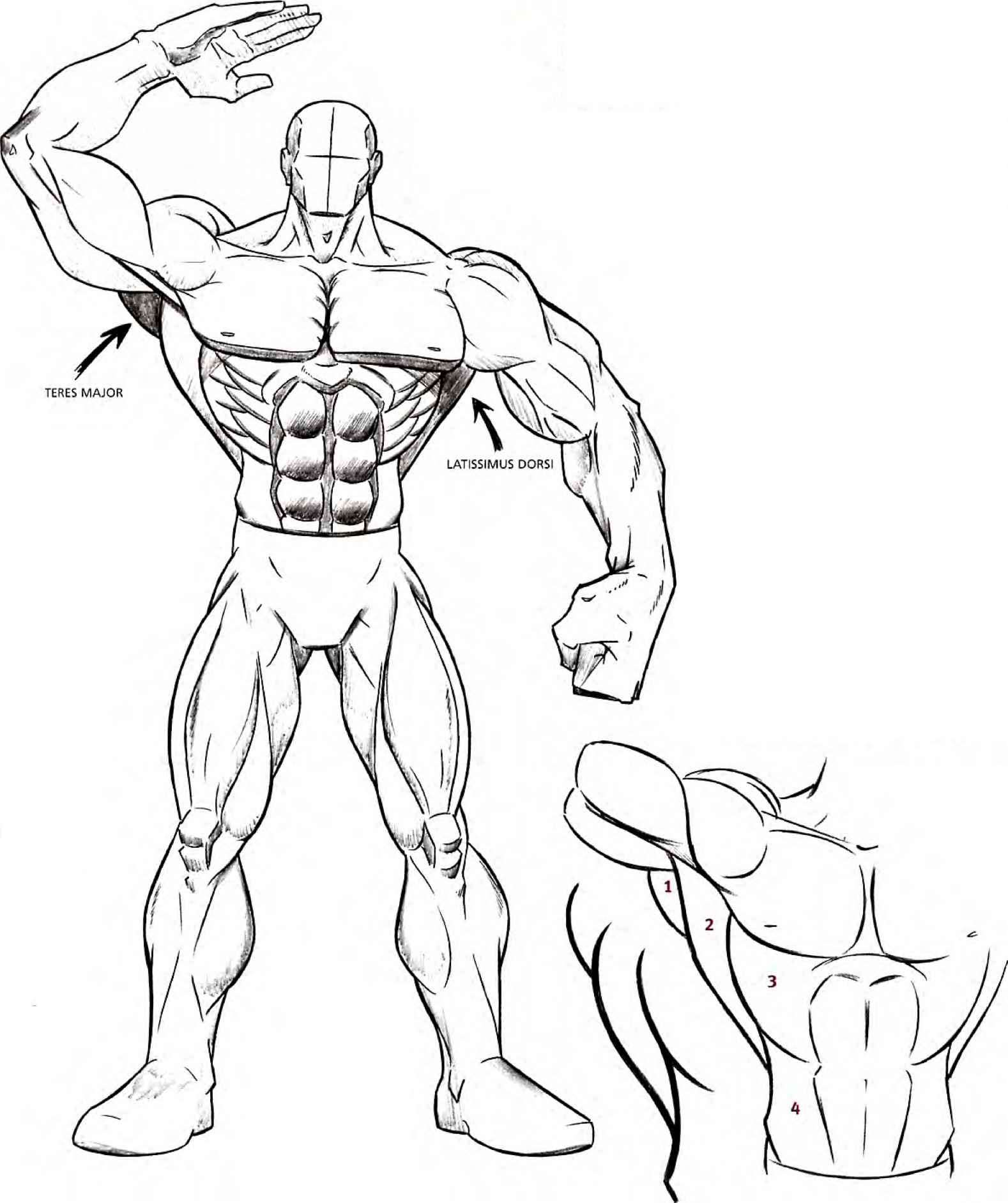 arm muscle drawing at getdrawings com