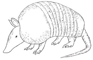 320x206 How To Draw An Armadillo
