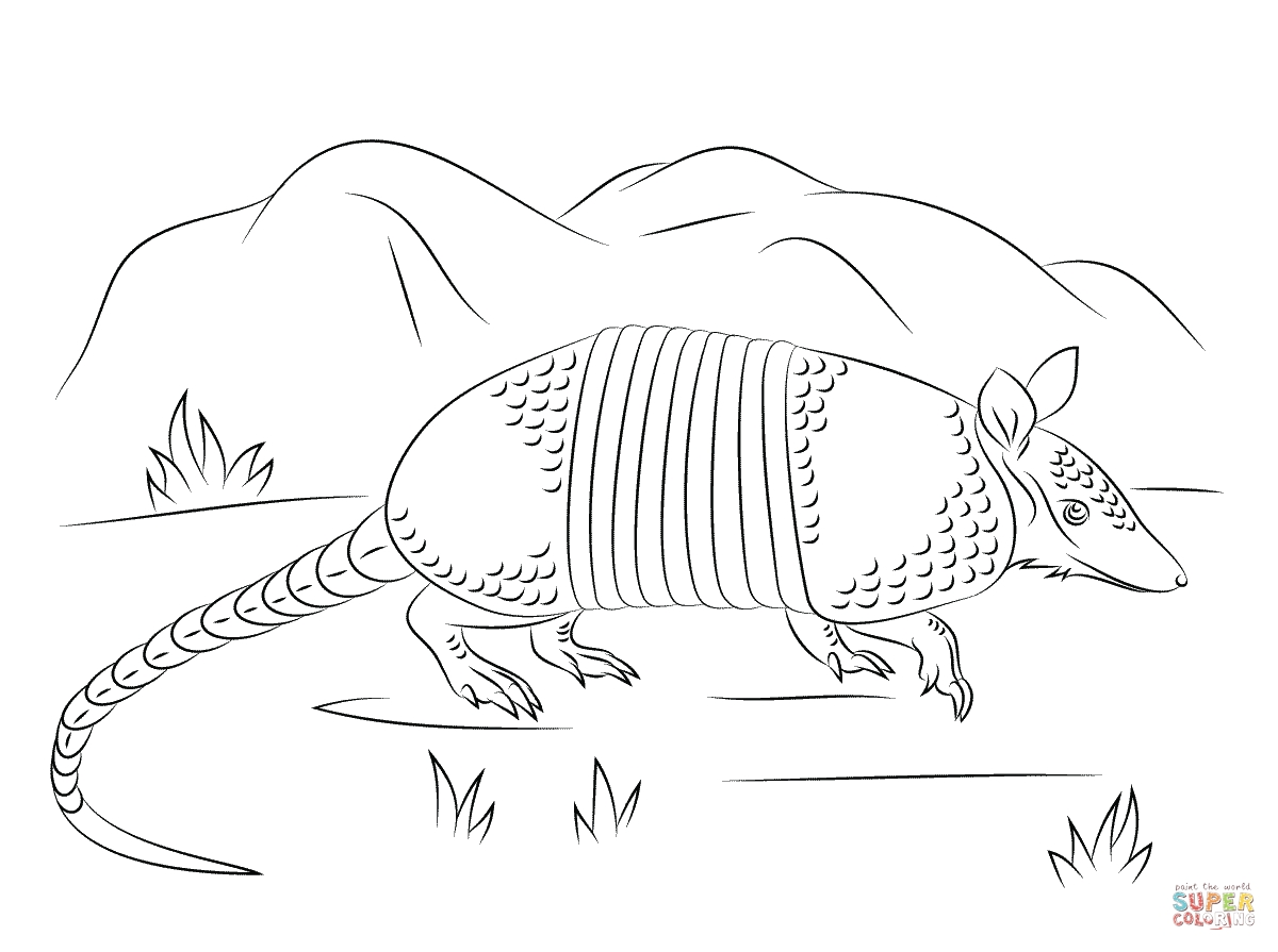 1200x895 How To Draw An Armadillo Printable Coloring Pages For Kids