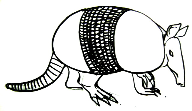640x370 How To Draw An Armadillo