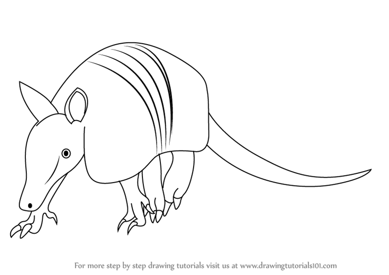 800x566 Learn How To Draw A Armadillo (Wild Animals) Step By Step
