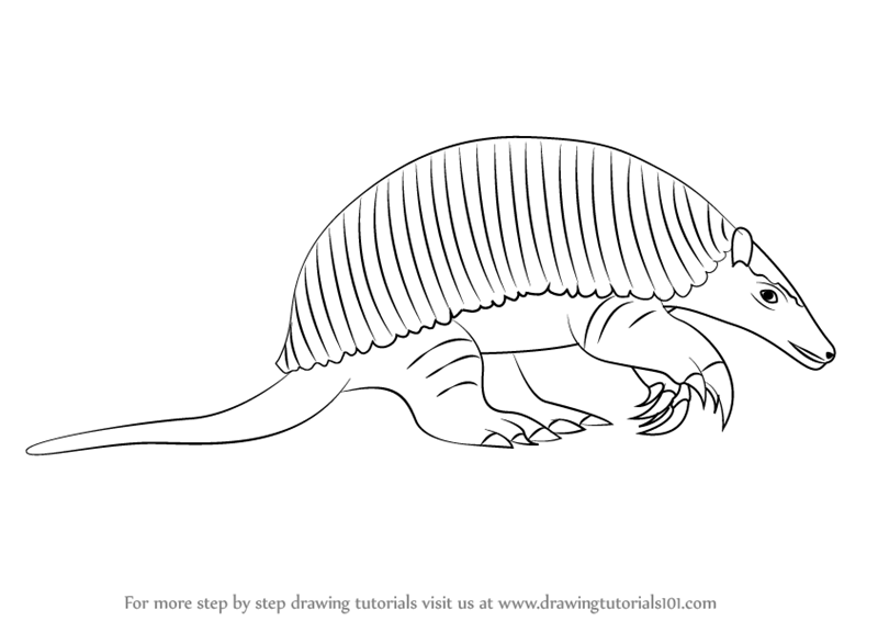 800x566 Learn How To Draw A Giant Armadillo (Other Animals) Step By Step