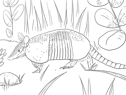 480x360 Nine Banded Armadillo Coloring Page Free Printable Coloring Pages