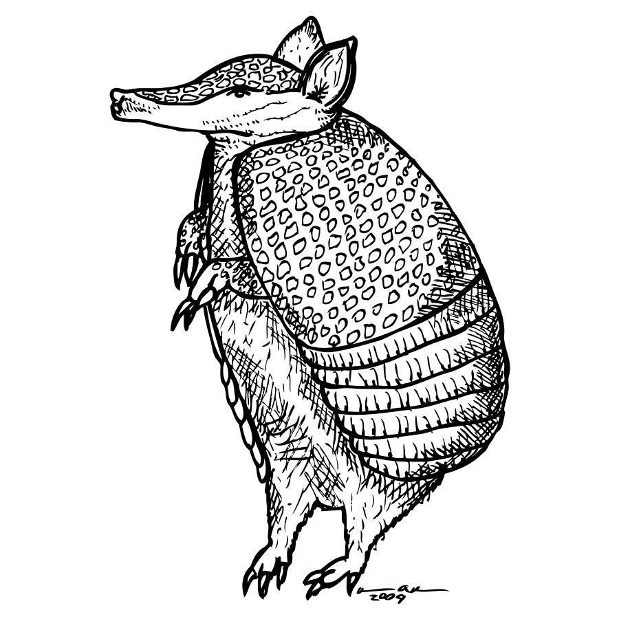 900x900 Standing Armadillo Drawing By Karl Addison