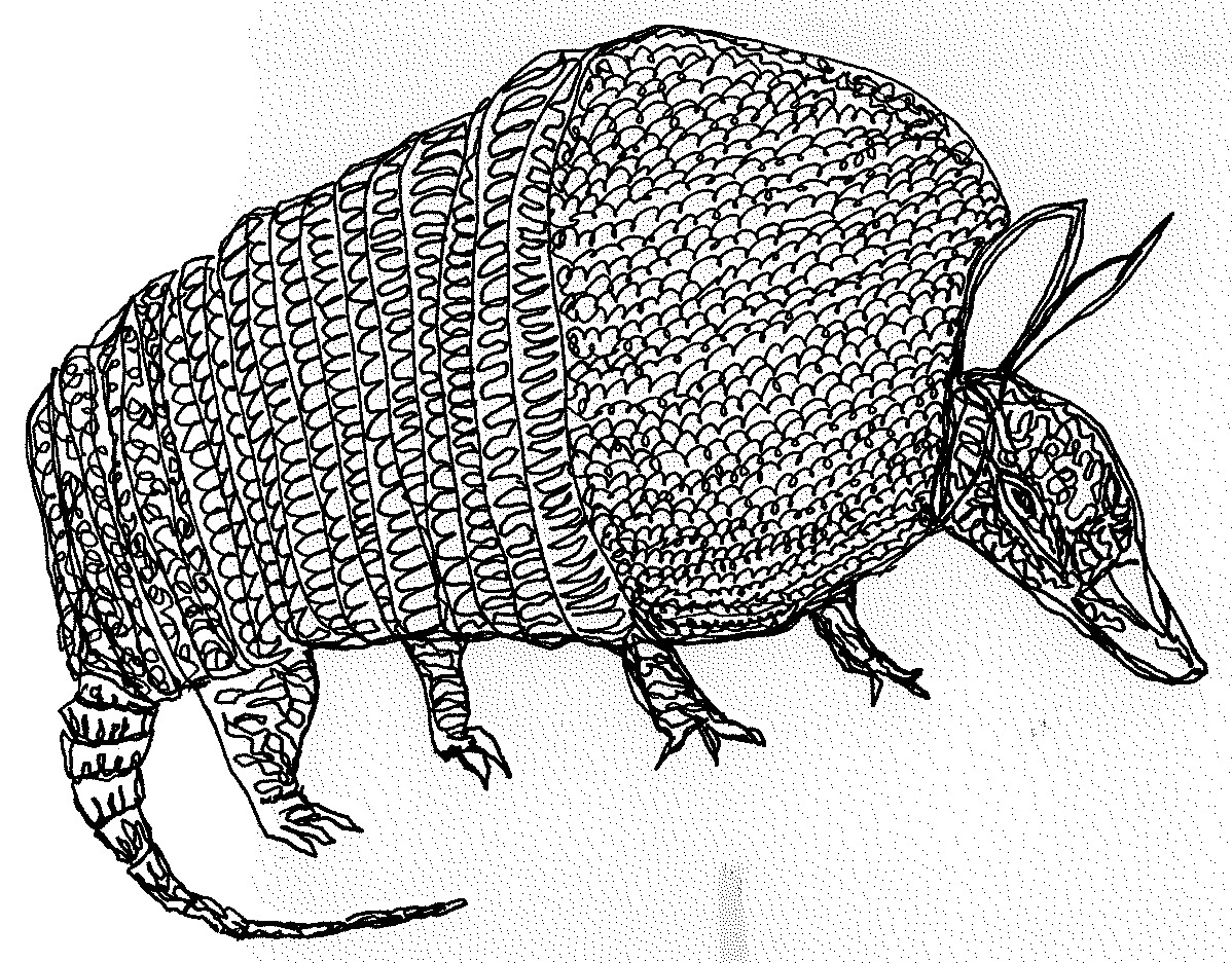 1198x937 The Quotidian Journal Meet Stamp, The Armadillo, In His Coat