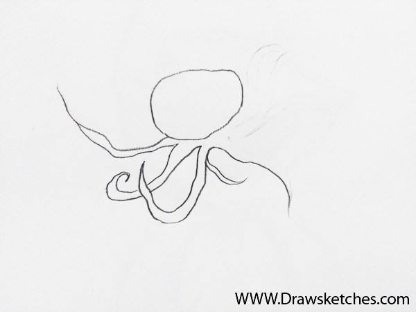 600x450 How To Draw An Octopus In A Few Easy Steps With Pictures