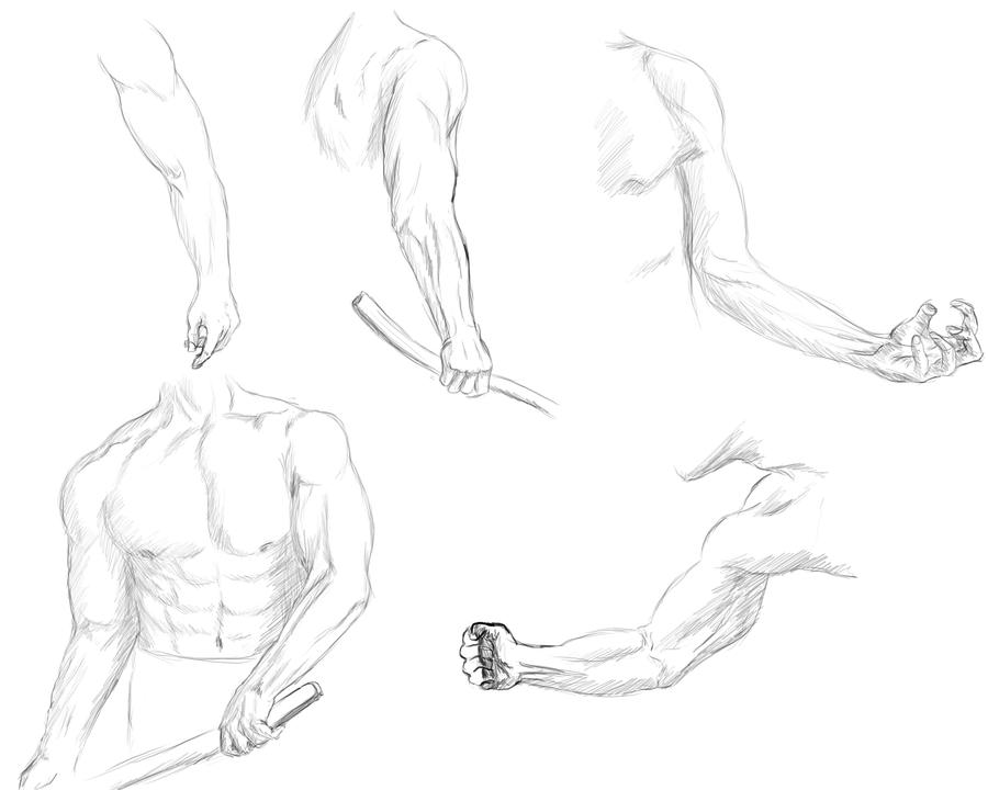 900x720 Male Anatomy 1