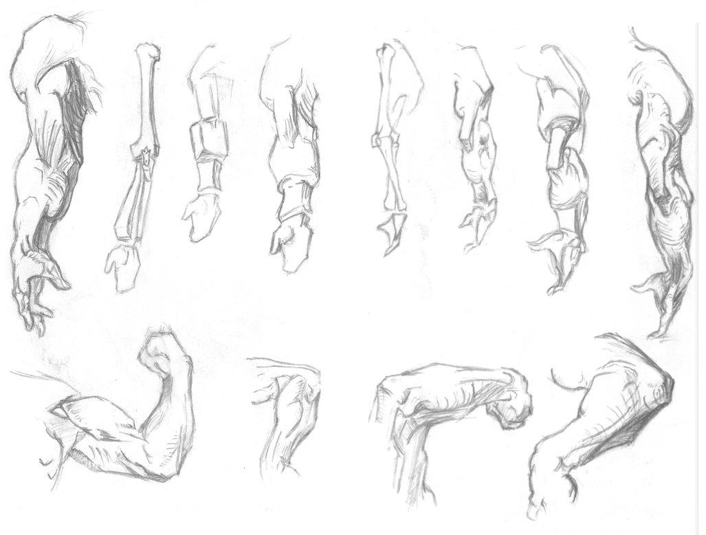 1027x778 Arm Sketches By Stokesworthsteele
