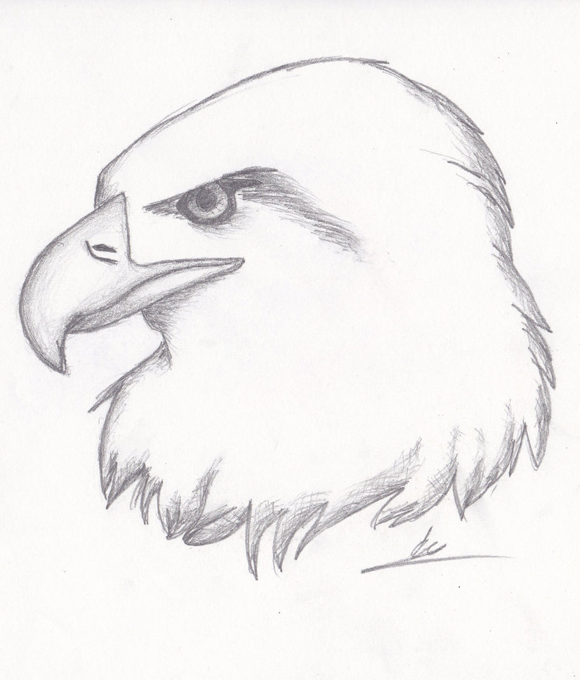 826x968 Realistic Eagle Sketch By Nightkitsune9