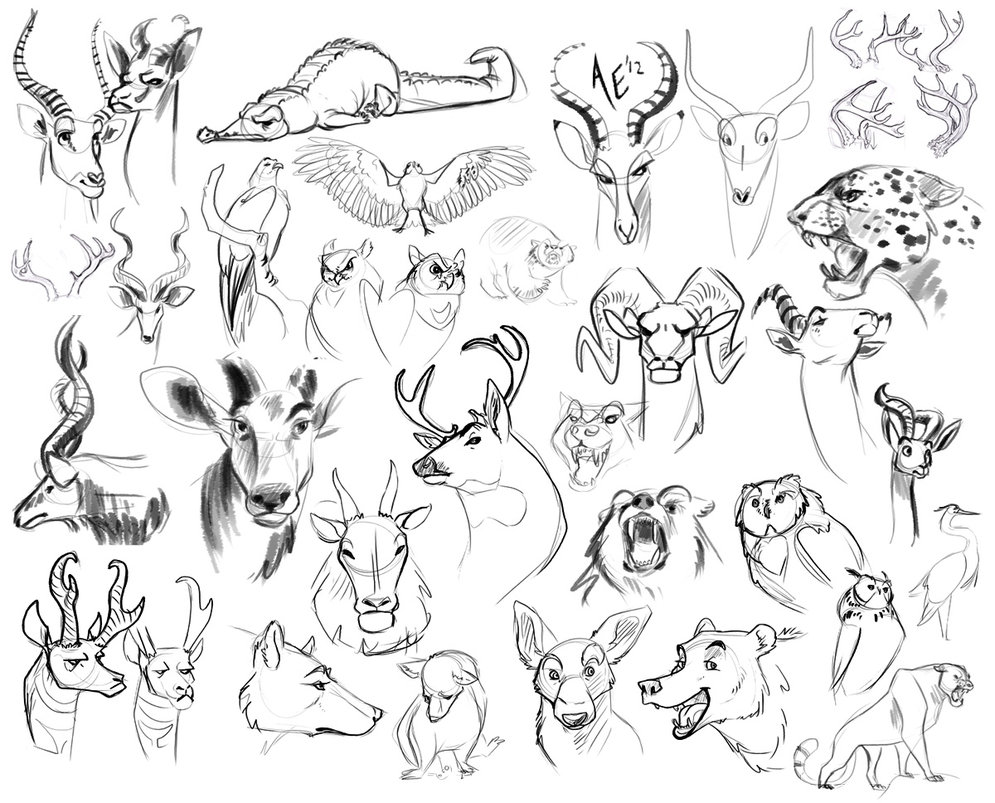 995x803 Sketch Dump Draw All The Animals By Turtle Arts