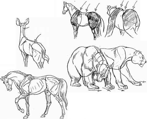 478x386 Tips On Drawing Animals