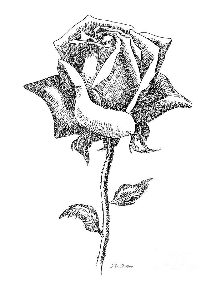 675x900 Rose Drawings Black White 5 Drawing By Gordon Punt