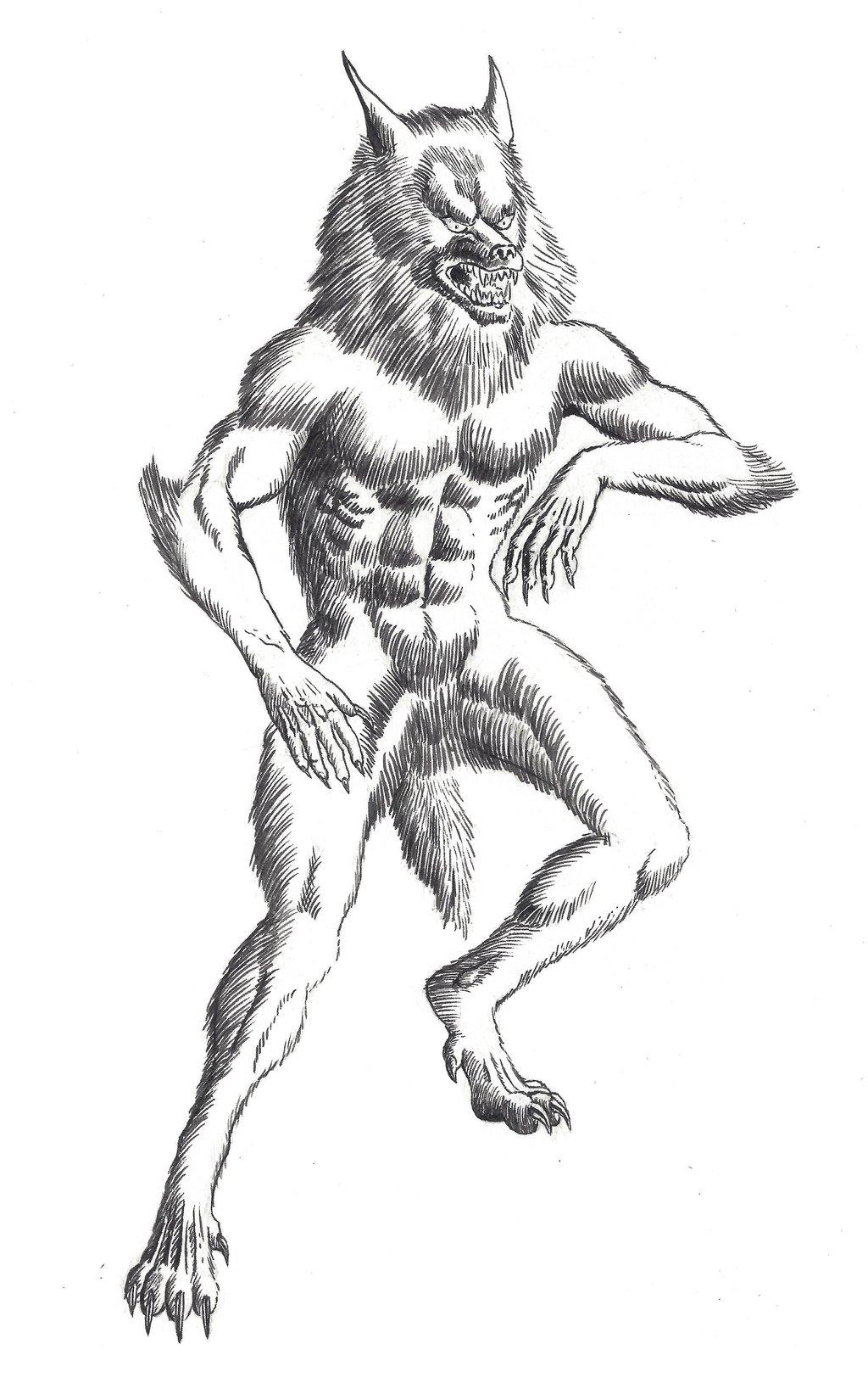 1024x1630 Werewolf (Brush And Ink) By Crazyeric24