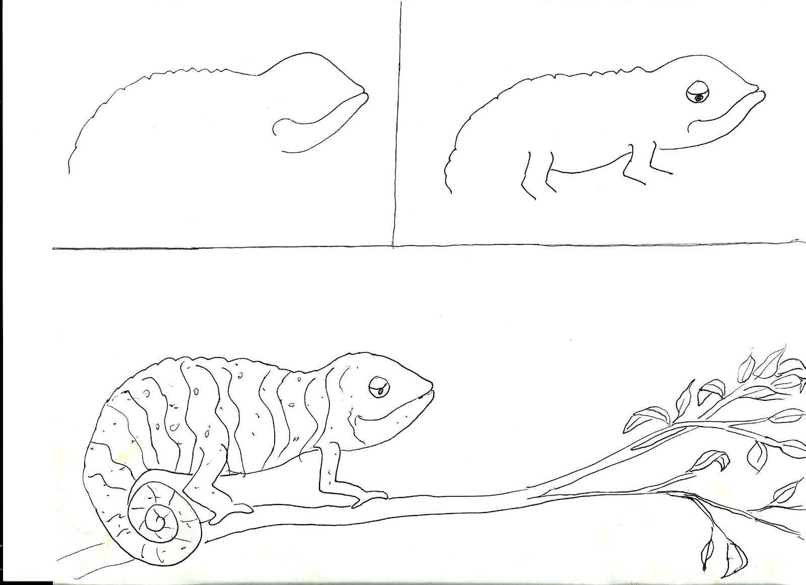 1600x1163 Chameleons Art Class Ideas