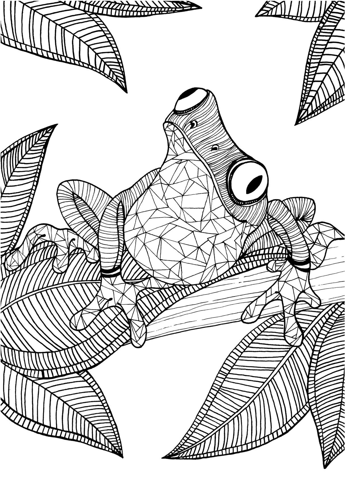 1213x1715 Frog Adult Colouring Page Colouring In Sheets