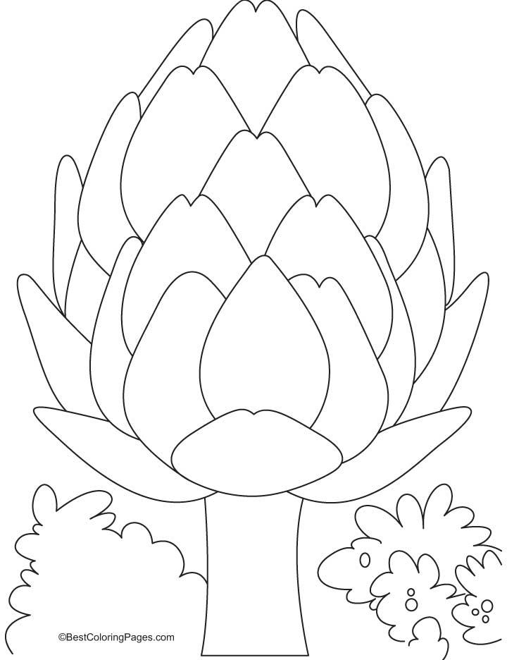 Artichoke Drawing
