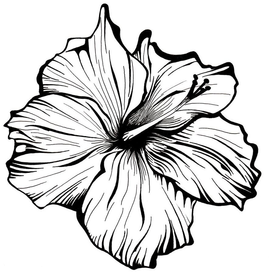894x894 White Flower By Robcrichton On Doodleampdrawing Flower