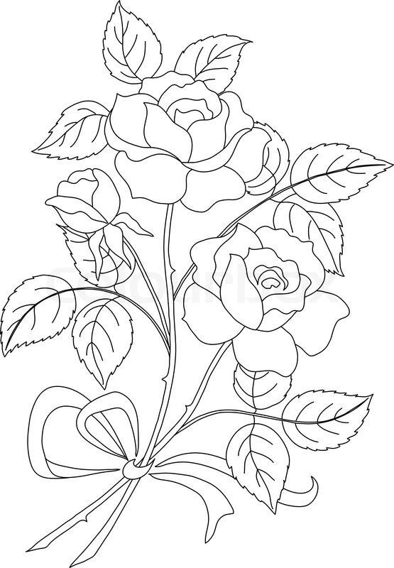 555x800 Climbing Rose Line Art