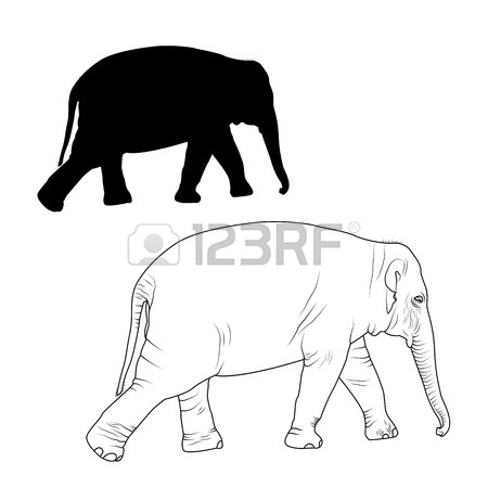 Asian Elephant Drawing