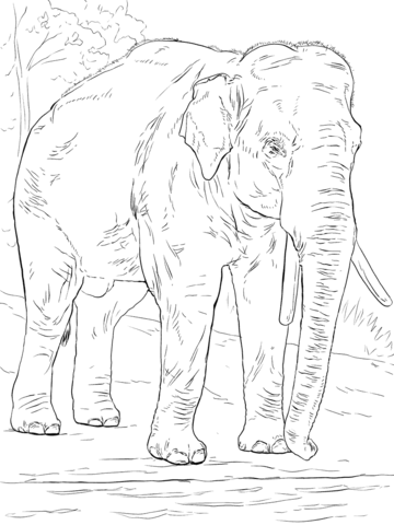 360x480 Asiatic Elephant Coloring Page Free Printable Coloring Pages