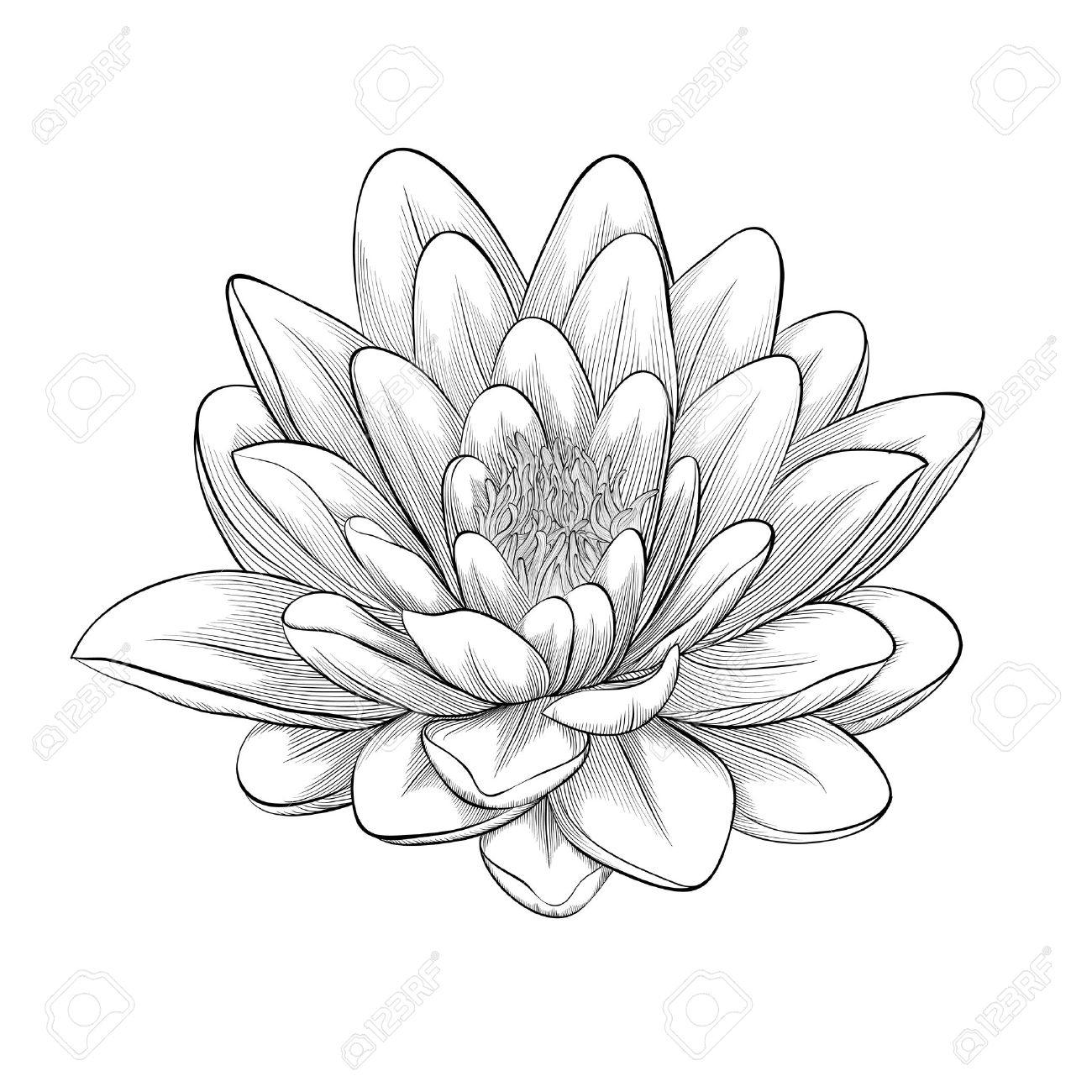 1300x1300 Lotus Beautiful Drawing Lotus Flower Drawing Black And White