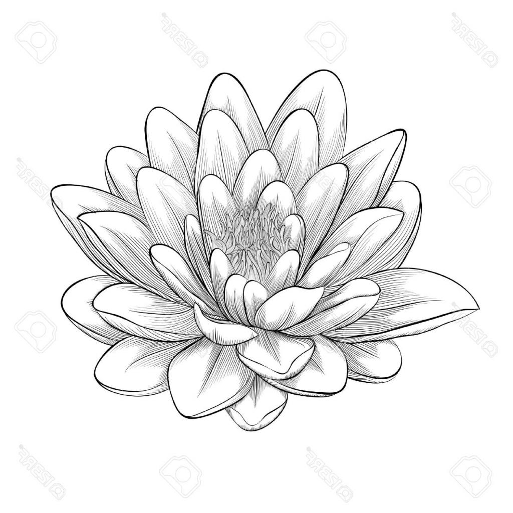 1024x1024 Lotus Beautiful Drawing Lotus Flower Line Drawing Beautiful
