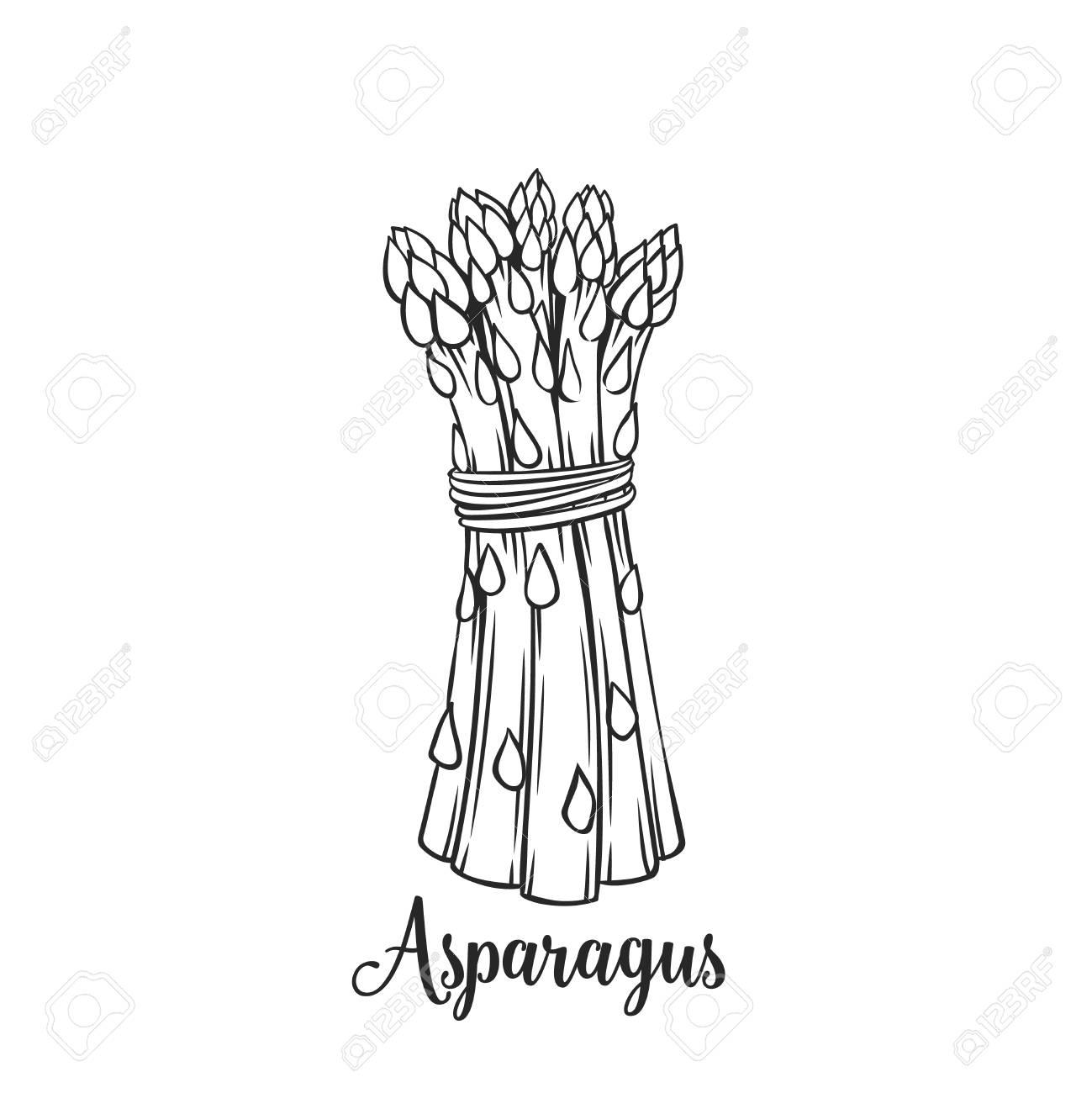 1299x1300 Hand Drawn Asparagus Icon. Royalty Free Cliparts, Vectors,