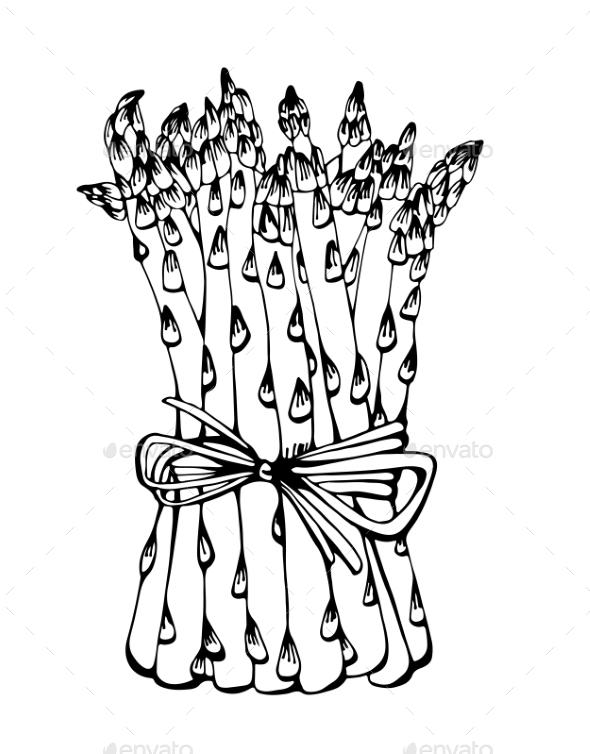 590x754 Asparagus Drawing By Fandorina Graphicriver