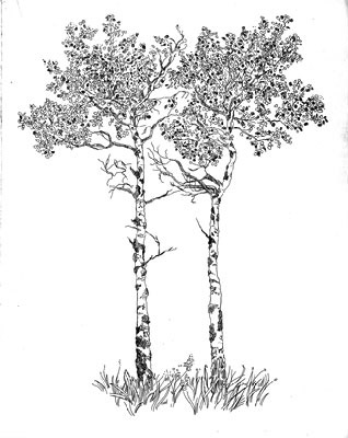 Aspen Drawing At GetDrawings
