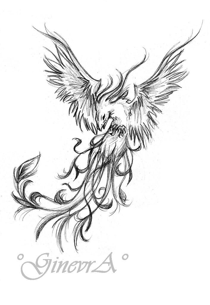 706x1024 24 Best Fire Phoenix Drawing Tattoo Images On Phoenix