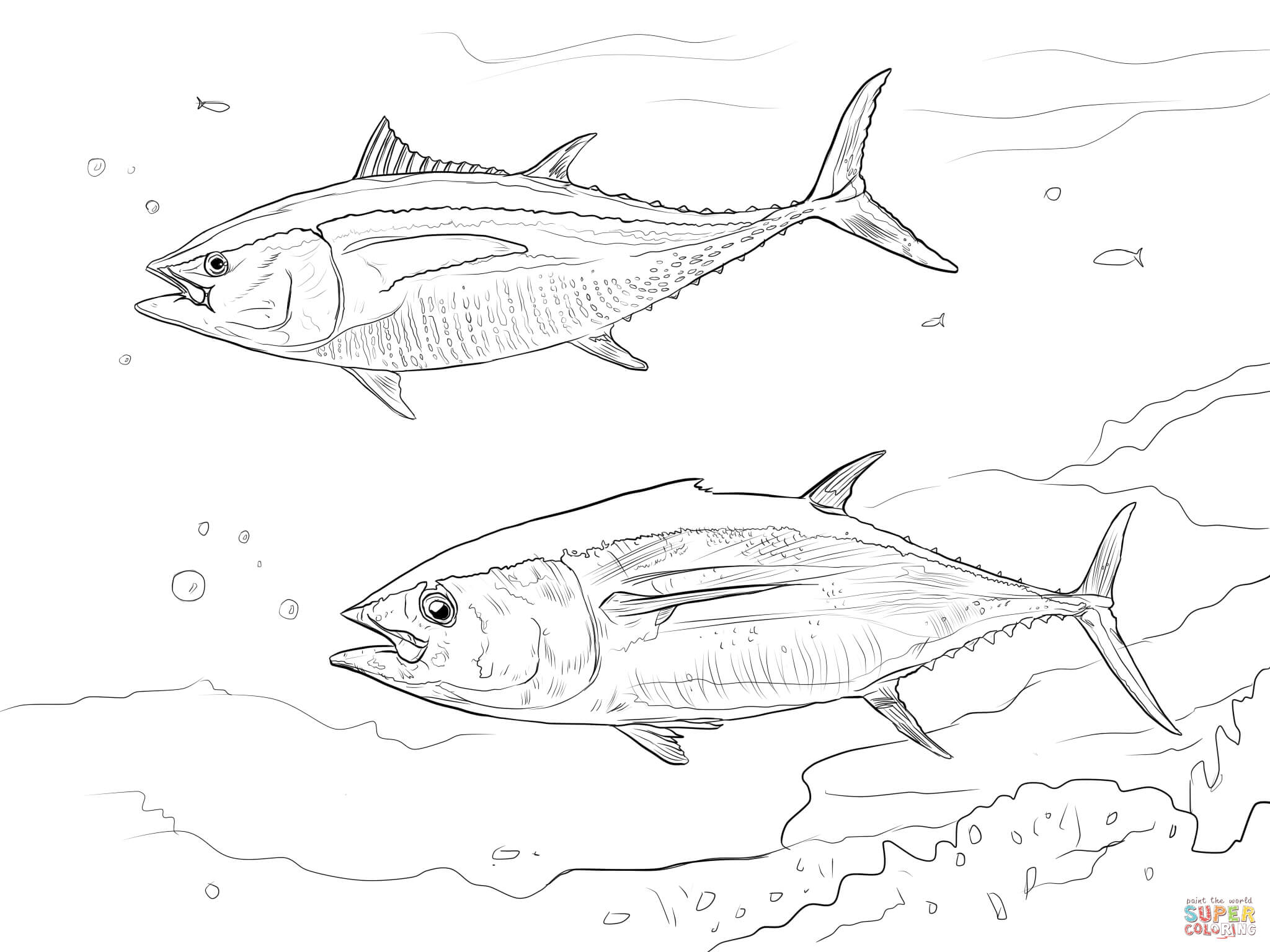 2048x1536 Pacific Bluefin Tuna Shoal Coloring Page Free Printable