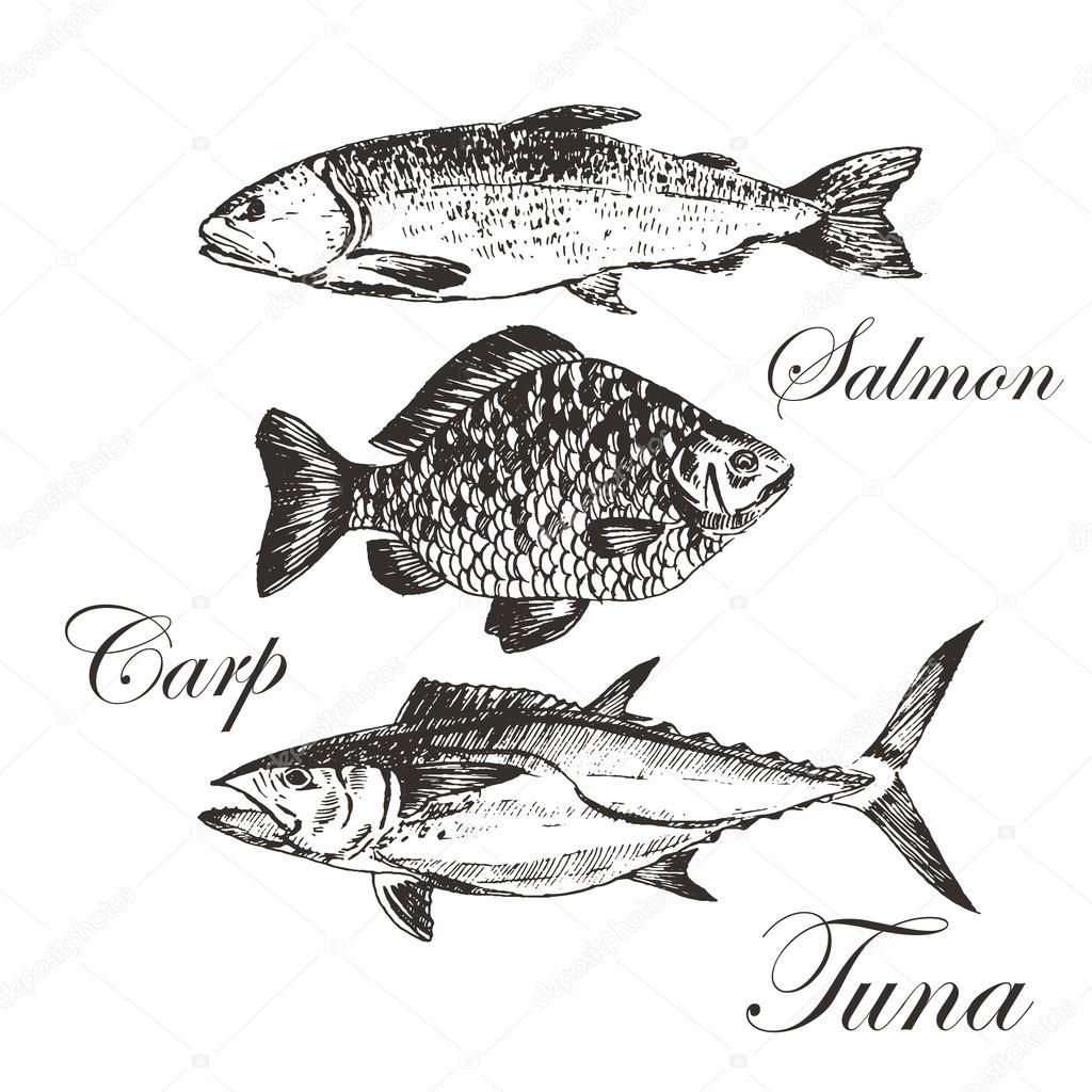 1024x1024 Vector Fish Sketch Drawing