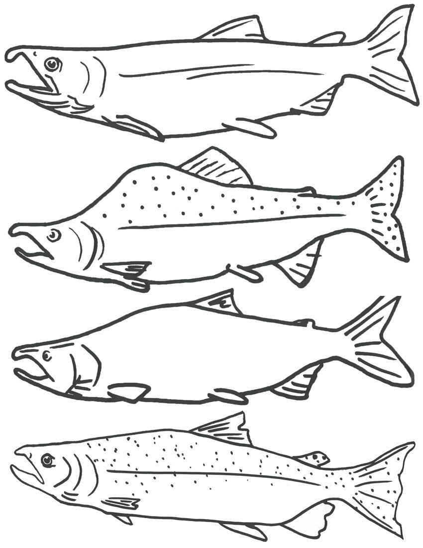 850x1100 Free Coloring Page Of Salmon Fish, Free Printable Fish Coloring