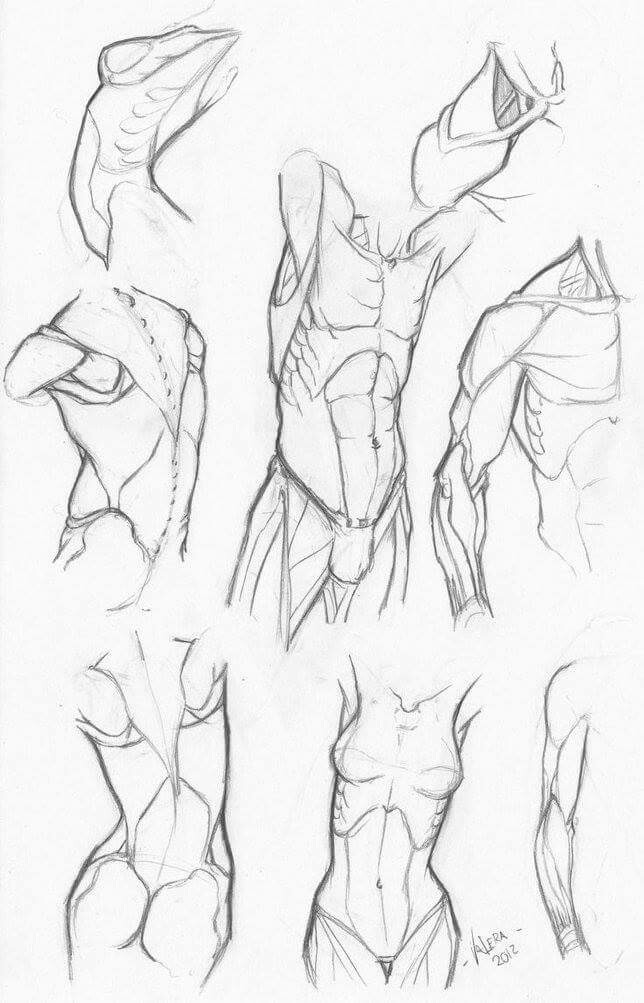644x1003 How To Draw Torsos How To Draw