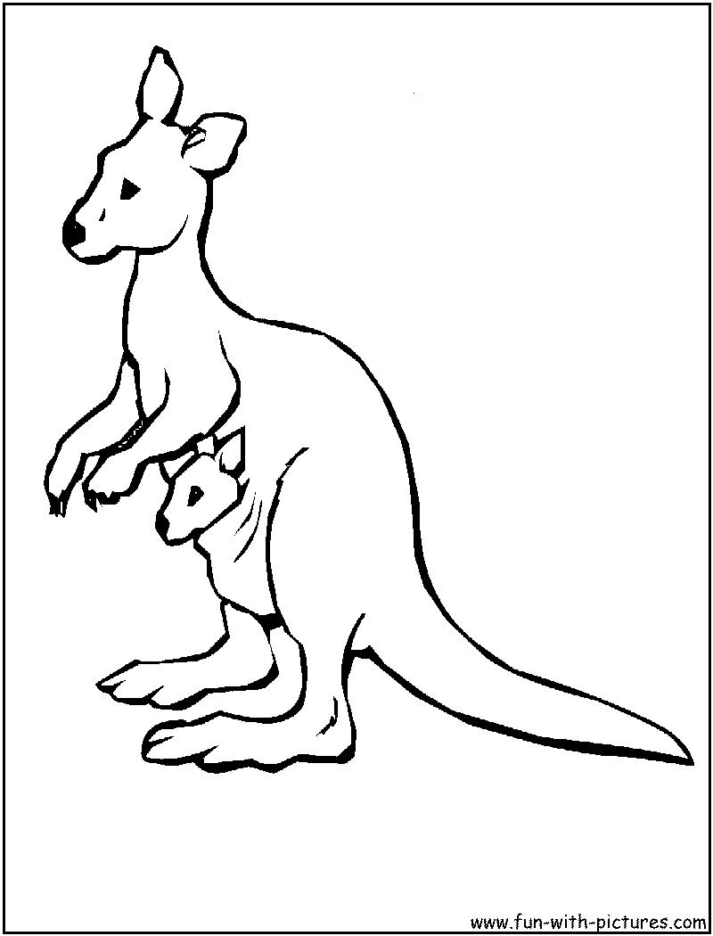 800x1050 Australian Animals Coloring Pages For Kids Coloring Pages