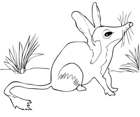 480x399 Australian Bilby Coloring Page Free Printable Pages