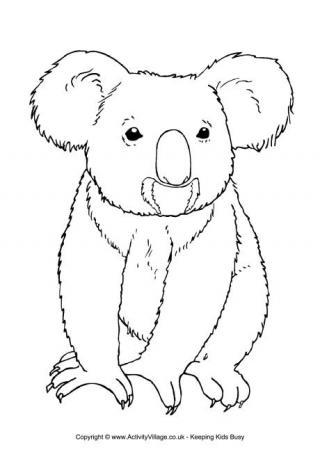 320x452 Koala Colouring Page 3 Christmas Aussie Australian
