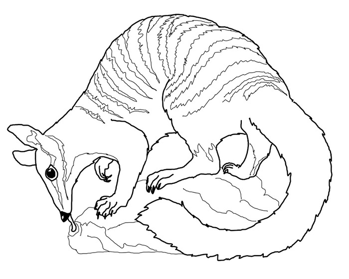 Animals Coloring Pages 700x560 Australian Animal Template