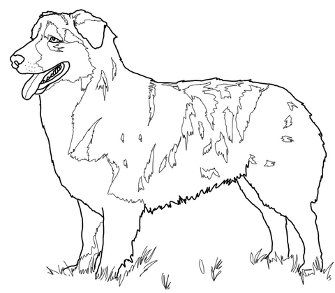 480x419 Australian Shepherd Coloring Page Free Printable Coloring Pages