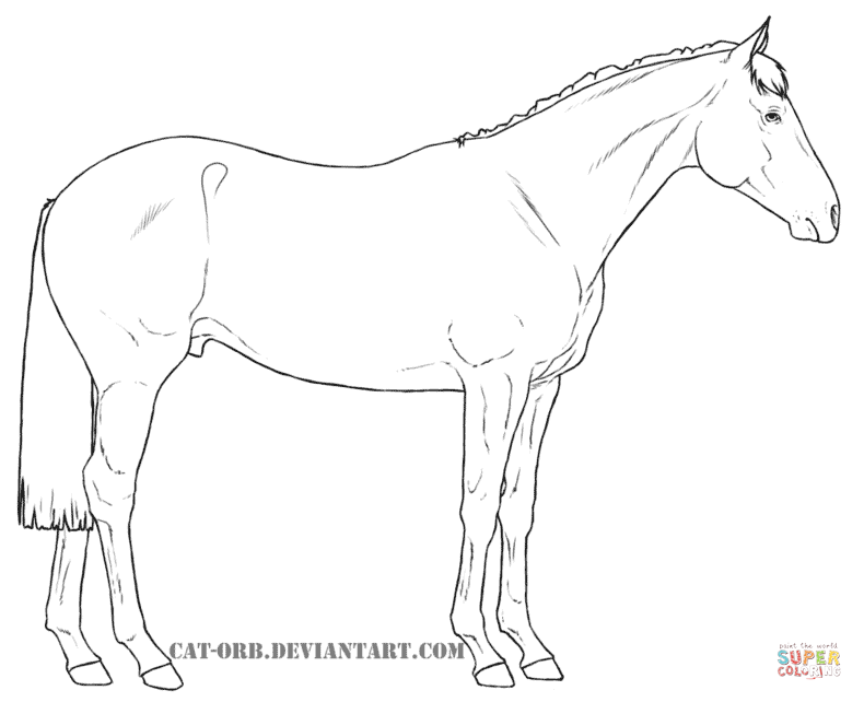 790x642 Australian Stock Horse Coloring Page Free Printable Coloring Pages