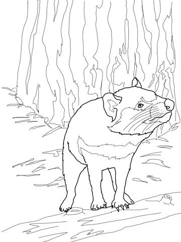 360x480 Australian Tasmanian Devil Coloring Page Free Printable Coloring